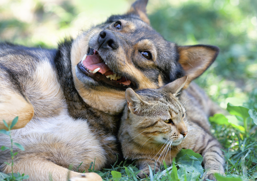 Animal Friends Rescue dog sitting with cat